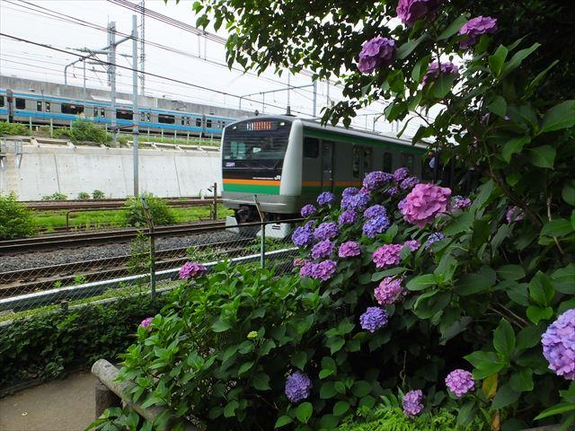 紫陽花と埼京線 (2)